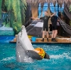 Дельфинарии, океанариумы в Красной Заре